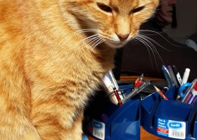 Bonesy - School Cat
